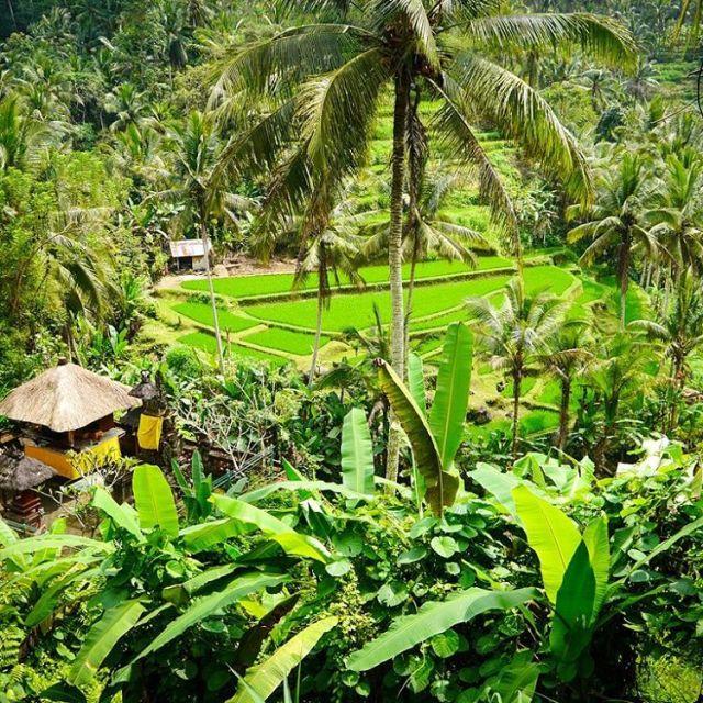 Comme des envies de retourner  Bali en ce moment!hellip