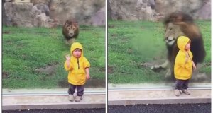 LoMásViral: Un niño saluda a León en Japón y no creerás lo que pasó
