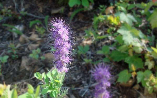3 - long purple flower