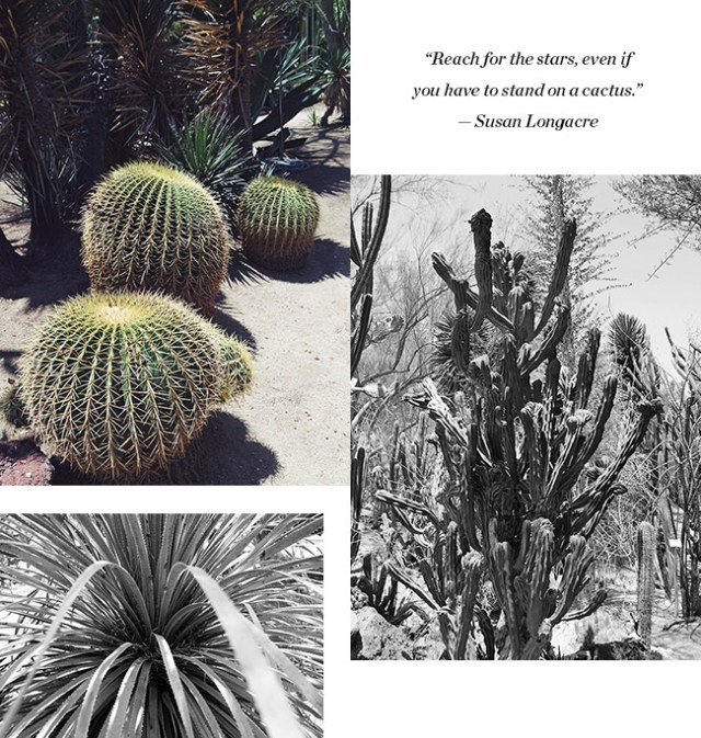 Nubby Twiglet | Out & About #6: Moorten Botanical Garden in Palm Springs