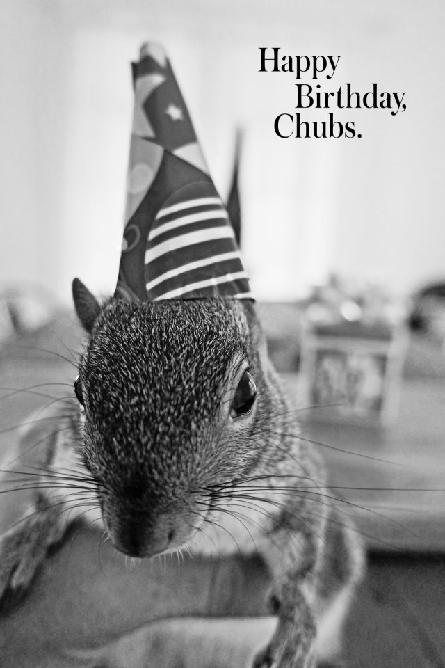 Nubby Twiglet | Happy Birthday, Chubs!