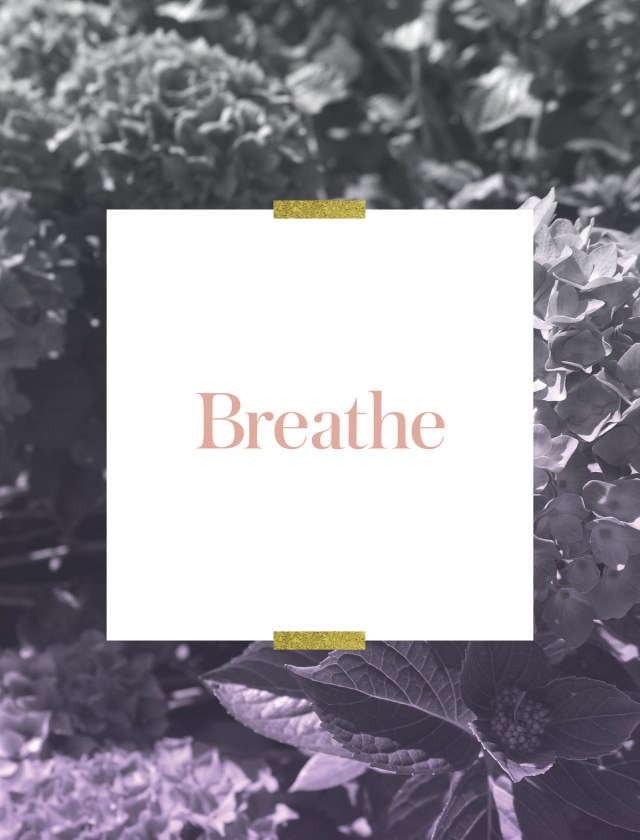 Branch | Olivine Atelier Beauty, Heart & Soul Oracle Cards