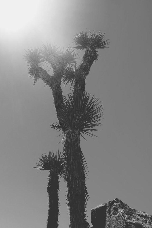 Nubby Twiglet | Joshua Tree