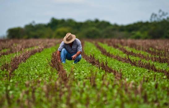 Agricultura busca relanzar sector caficultor