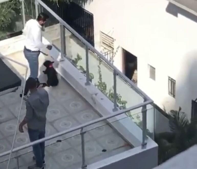 PGR anuncia trabaja sometimiento a hombre que maltrató perra en Bella Vista