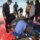 Ministerio de Medio Ambiente libera manatíes en cautiverio