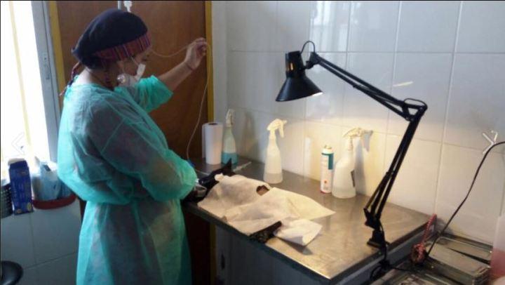 Programa de esterilización en la comuna de Huasco