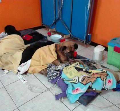 """Alcalde Loyola: """"Envenenar perros es un hecho que repudiamos"""""""