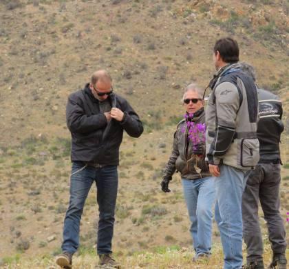 """Municipio de Huasco interpondrá denuncia tras fotografías que muestran """"destrucción"""" del desierto florido"""