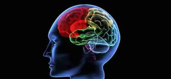 brain 652 x 300