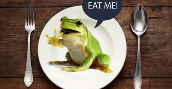 To diet or not to diet — Part 2