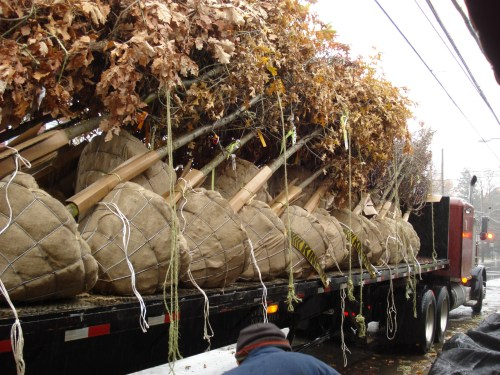 B&B trees on truck Matthew Stephens