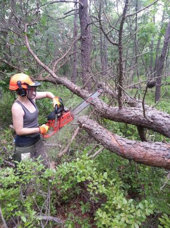 our-intern-allison-bradey-limbing-an-infested-tree-that-was-cut-down-during-spot-suppression