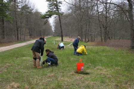 volunteers-at-i-love-my-park-day-replanting-pitch-pine-trees