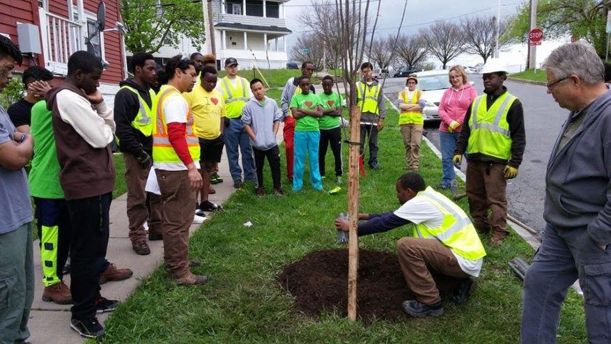 tree-planting-demo