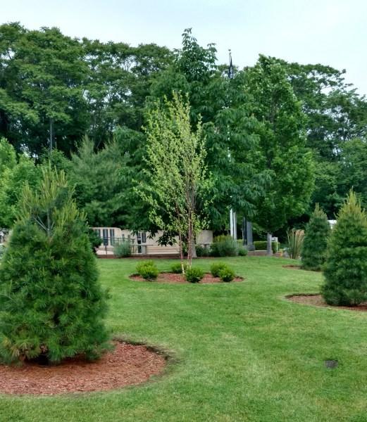 Grant Plantings -2