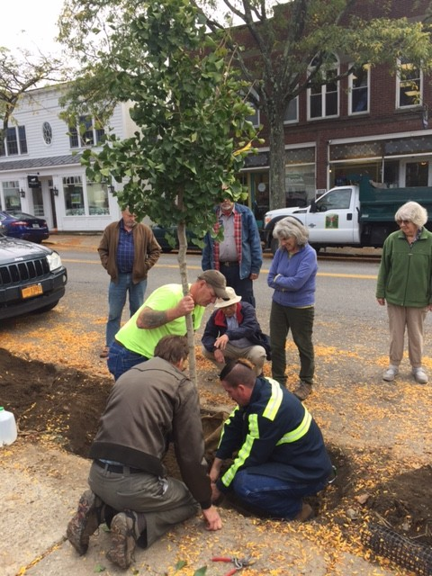 Tree planting Millbrook Oct 12 2017