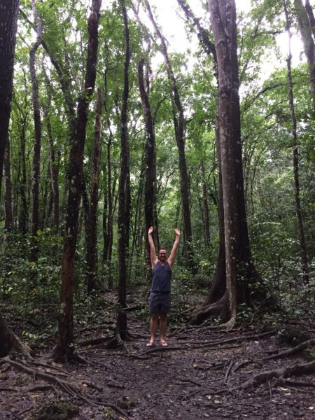 in the Mahogany forest in the Phillipines
