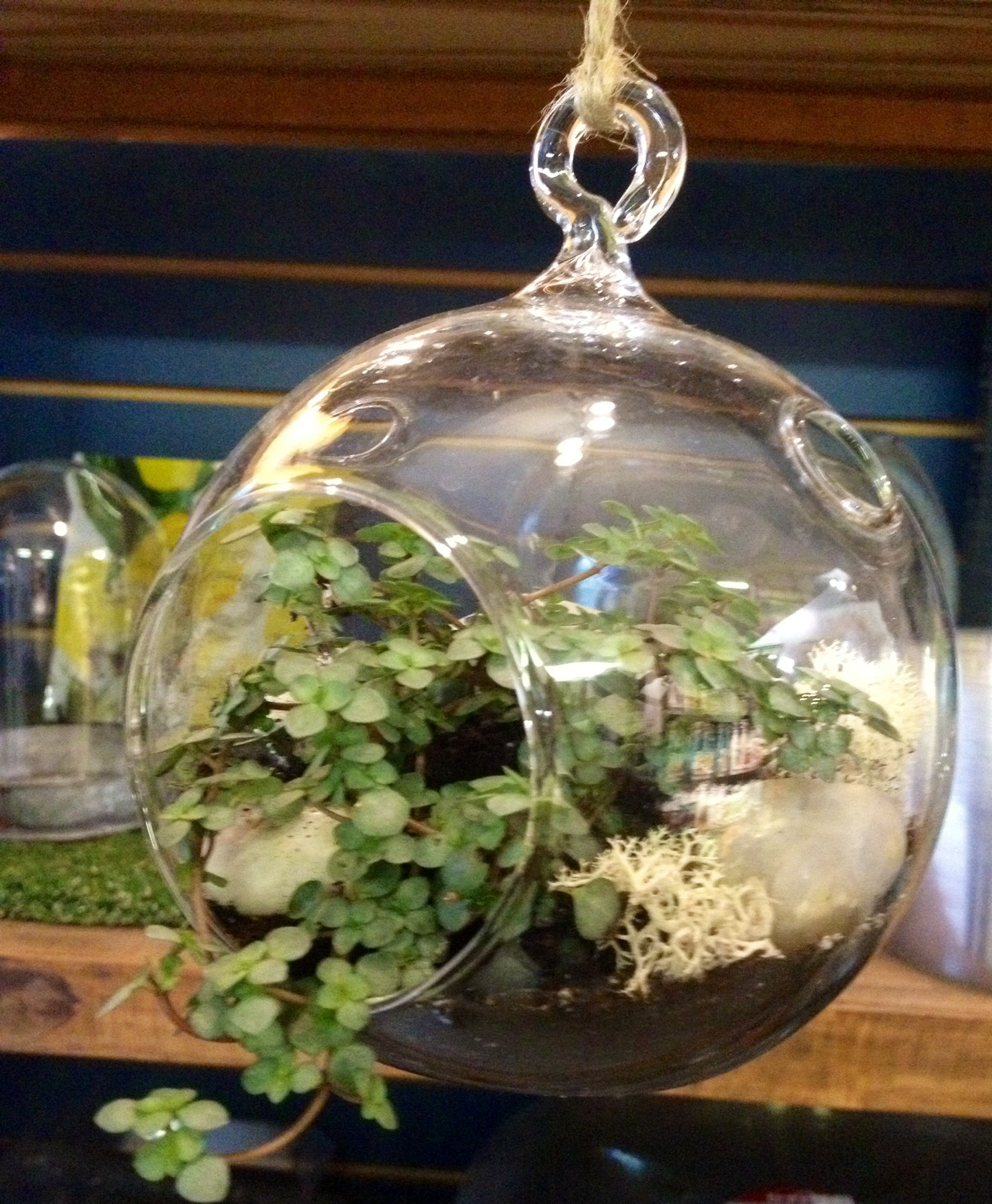 Dashing Fairy Gardens Oak Leaf Containers Fairy Gardens Make Your Terrariums Fairy Gardens Make Your Terrariums garden Containers For Fairy Gardens