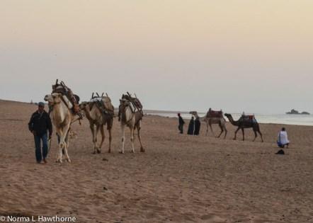 Sept24_CamelsSunset-9