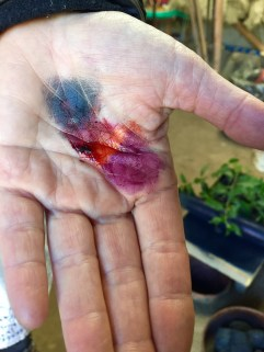 CochinealHand