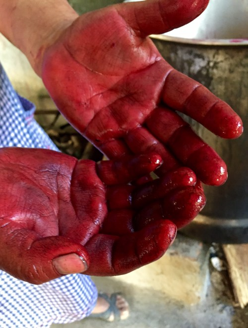 Hands in the cochineal dye bath