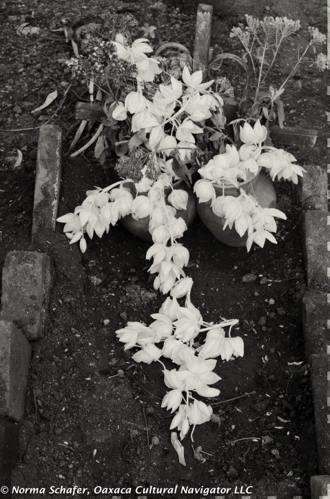 Flowers in the form of a cross, covering a fresh gravesite. Teotitlan del Valle.
