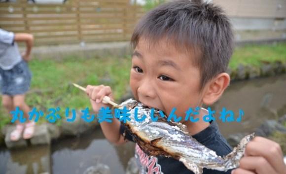 魚丸かぶり