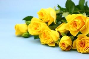 薔薇の花言葉本数4