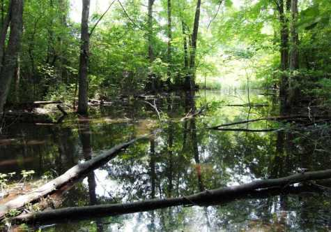 Conservancy Group to Preserve South Woods