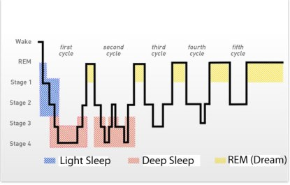 sleep-cycles