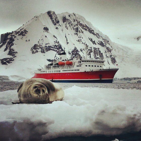 Seal and Cruise Ship