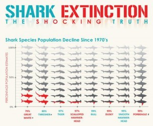 Figure 2: Population declines since 1970's of 8 shark species showing the sad state of sharky populations. Unfortunately, this is the case for many more species as well. Image from whaleofatale.org