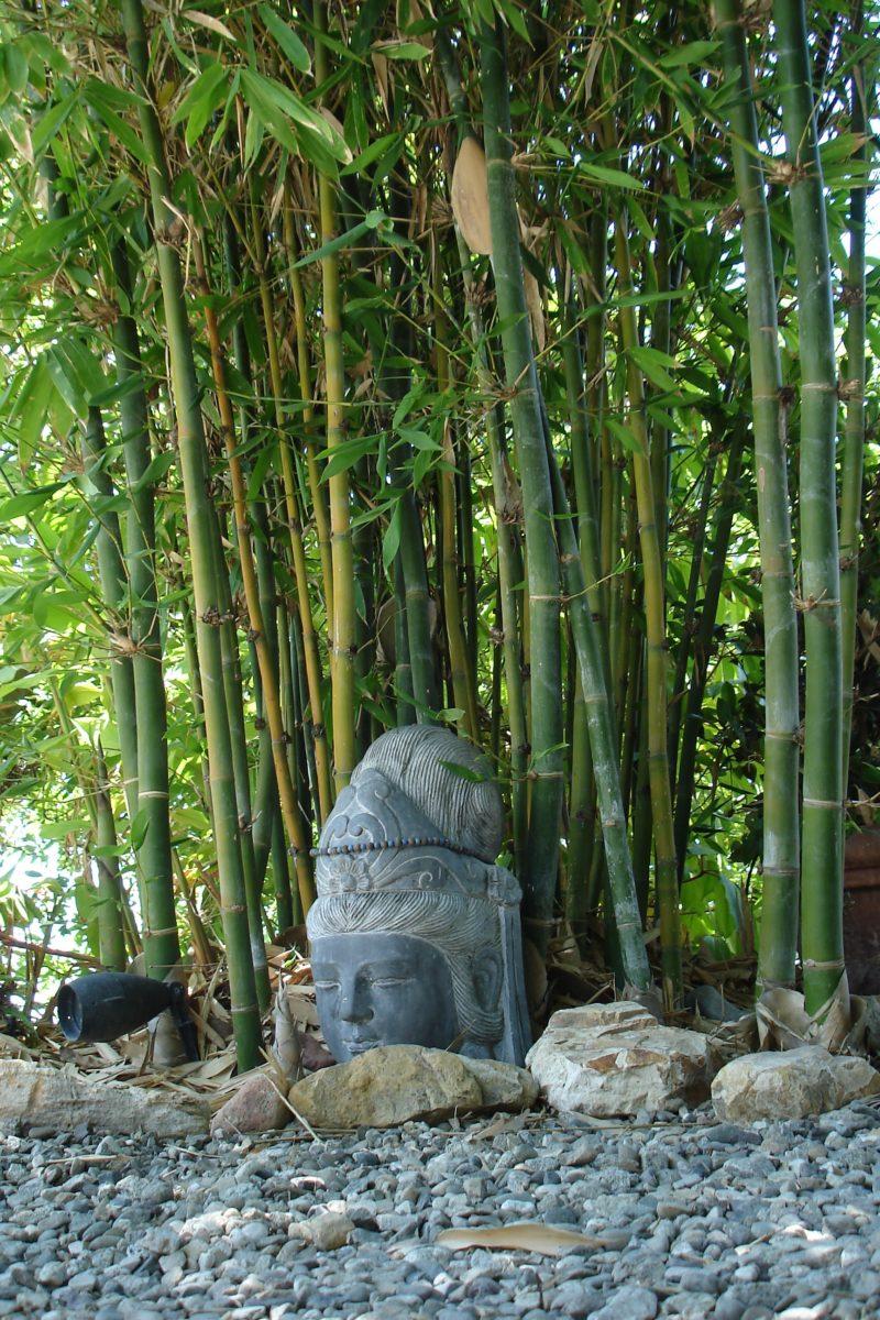 Large Of Buddha Belly Bamboo