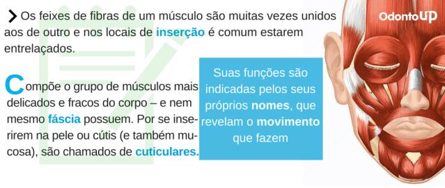 Os feixes de fibras de um músculo são muitas vezes unidos aos de outro e nos locais de inserção é comum estarem entrelaçados.-4