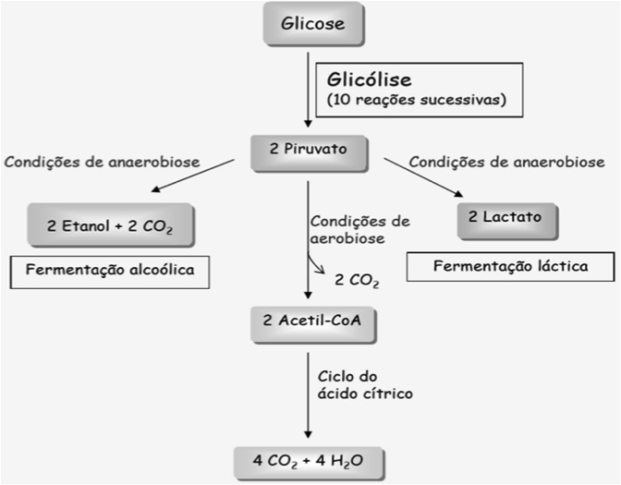 bioenergetica1