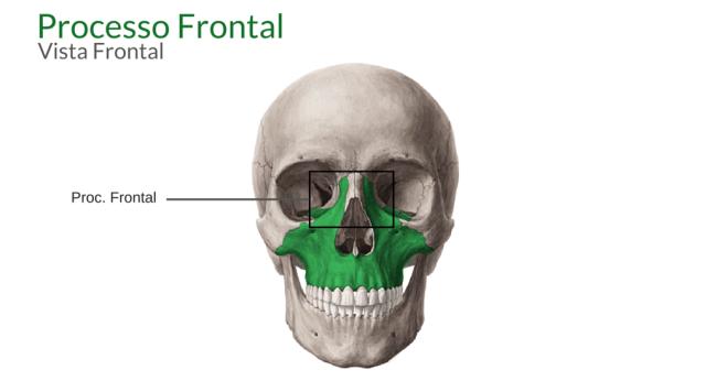 processo frontal maxila