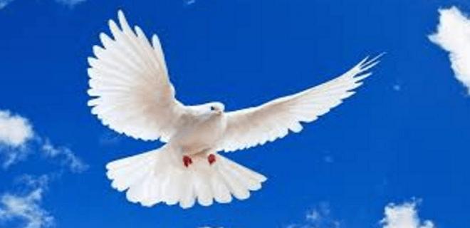 PiGuinho canoniza malfeitores públicos após decesso