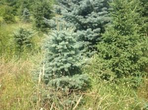 trees22