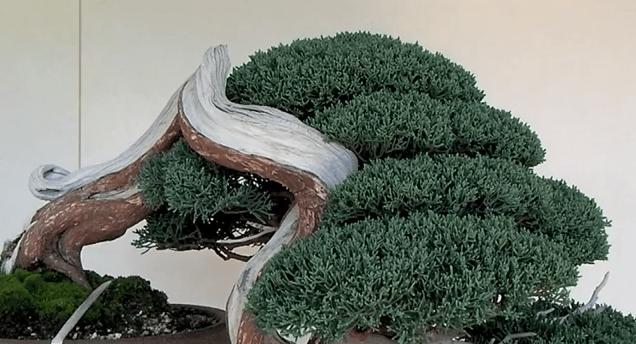 The_Bonsai_Art_of_Japan_-_Episode_18