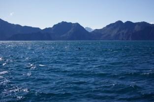 Kenai Fjord Tour