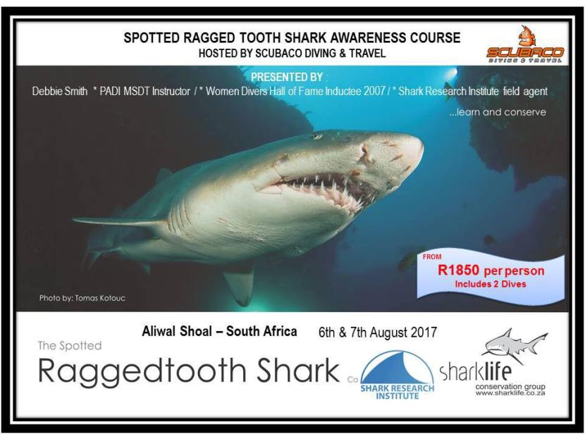 Spotted ragged tooth shark course