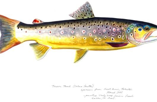 Brown Trout (James Prosek)