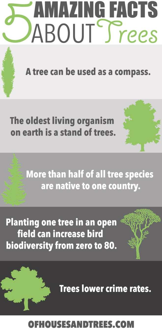 Amazing Facts About Trees | Five amazing facts about trees! Did you know a tree can be used as a compass, fight crime and increase bird biodiversity from zero to 80 species?