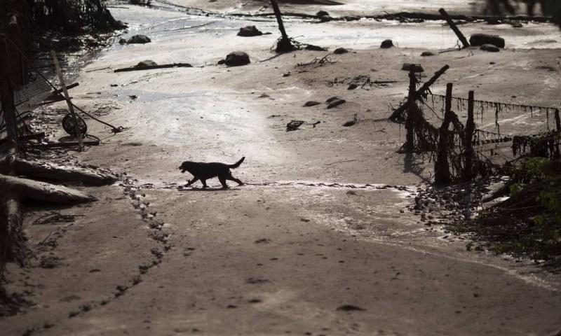 Cachorro caminha na lama no distrito de Bento Rodrigues, destruído pelo rompimento das barragens Felipe Dana / AP