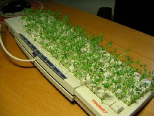 grass_keyboard