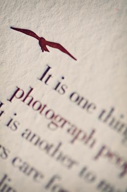 Letterpress Thank You Cards Bird Detail Claytons Elegant Letterpress Thank You Cards