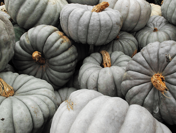 Gray Pumpkins Doug McMillen {happy weekend!}