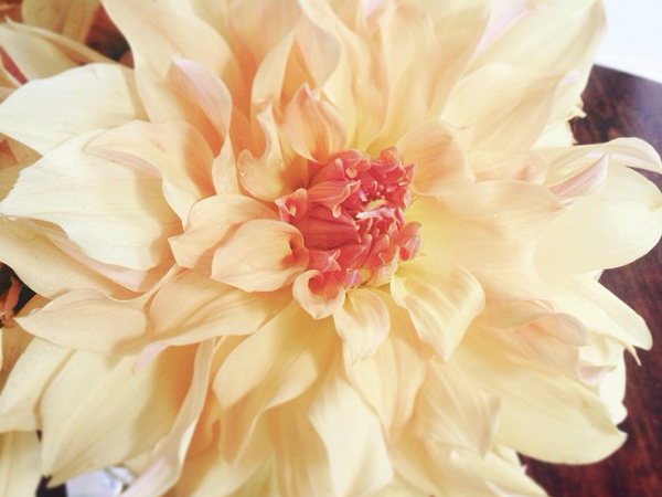 OSBP Dahlia Instagram Happy Weekend + August Break!