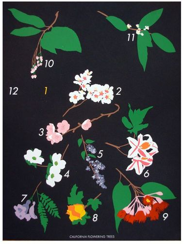 6a00e554ee8a2288330128756e0b9e970c 500pi Floral & Fruit Prints by Claire Nereim